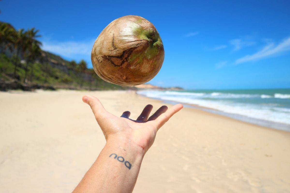 Postanite tudi vi poznavalec kokosa!